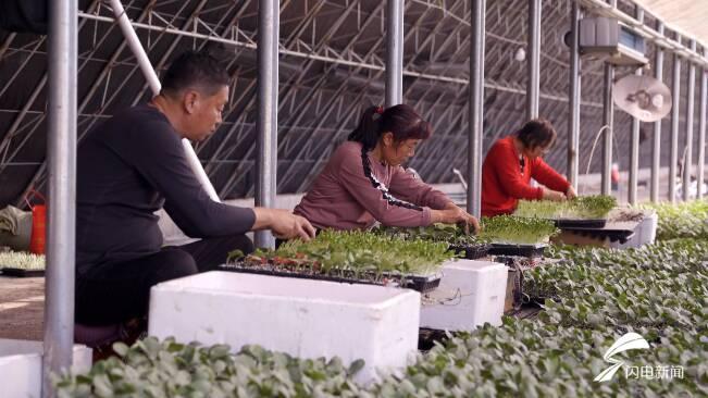 72秒|一年培育1500万株!潍坊昌乐育苗企业迎来新机遇