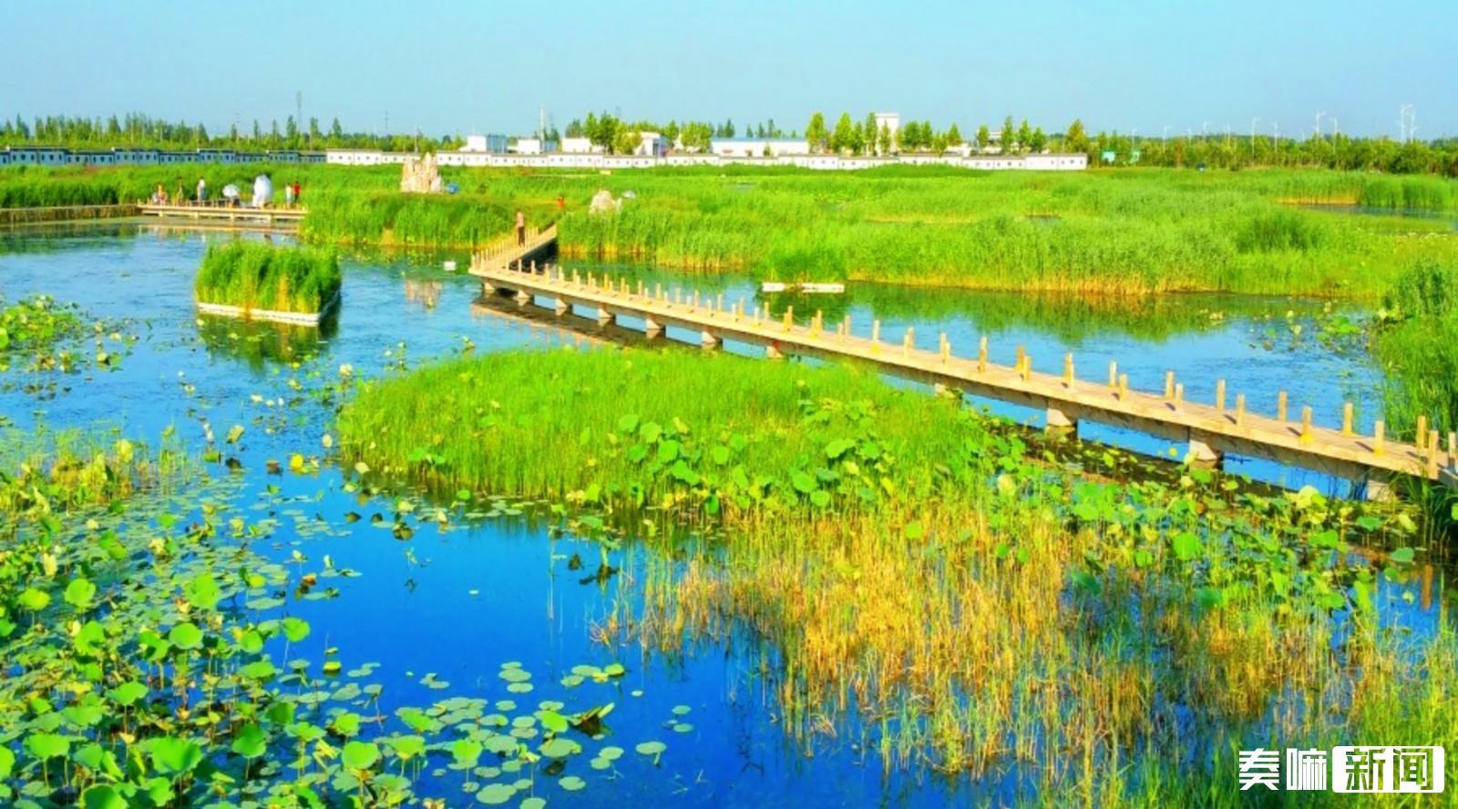 夏津国家级湿地公园九龙口湿地公园